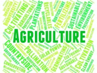 Agricultural Income & Sale of Agricultural land : Tax Treatment, Computation & Implications